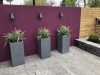 Three Garden Pots against an Aubergine Wall