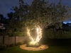 Old Apple Tree Lit up with Fairy Lights