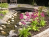 Bridge of Stream in Garden