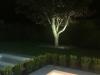Tree Up Lit at Night