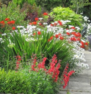 Beautiful Summer Flowering Planting