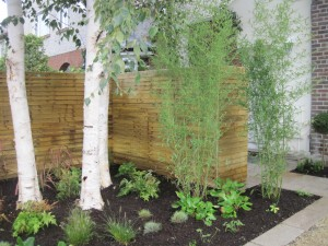 Beautiful Birch Trees in a Front Garden Design
