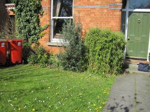 Before Garden Transformation